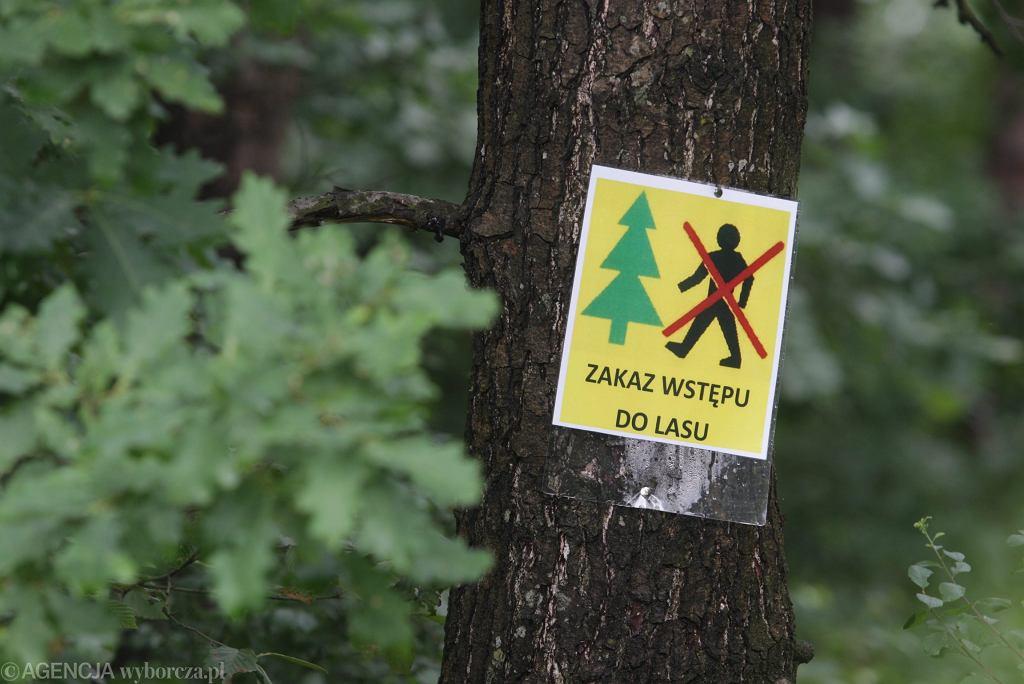 RPO krytykuje decyzję o zakazie wstępu do lasa