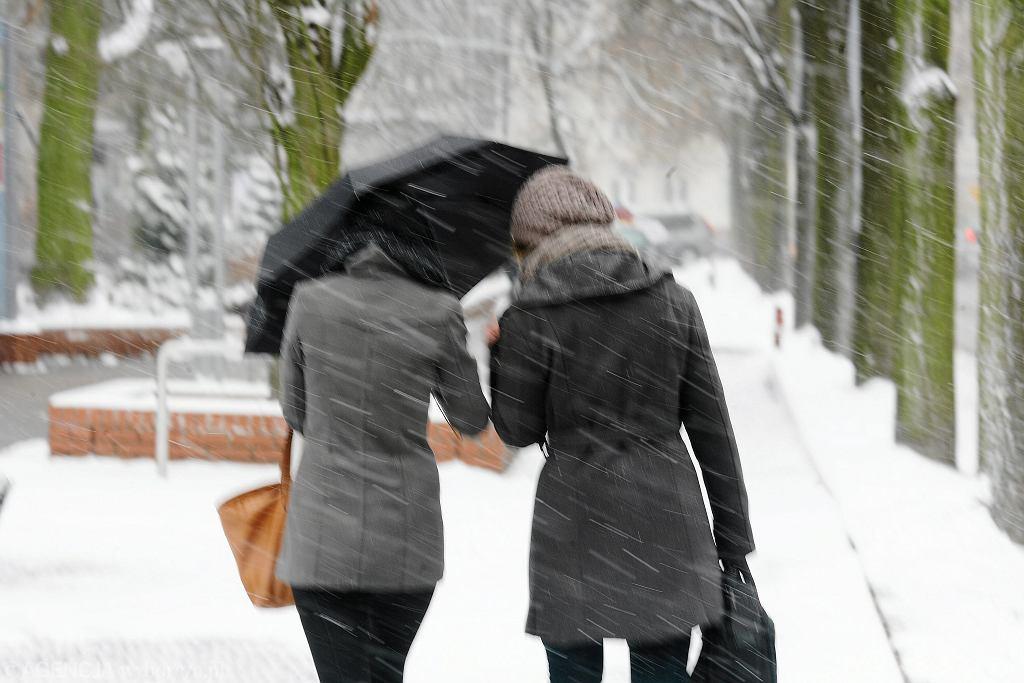 Pogoda. Wiatr i opady śniegu. Zdjęcie ilustracyjne
