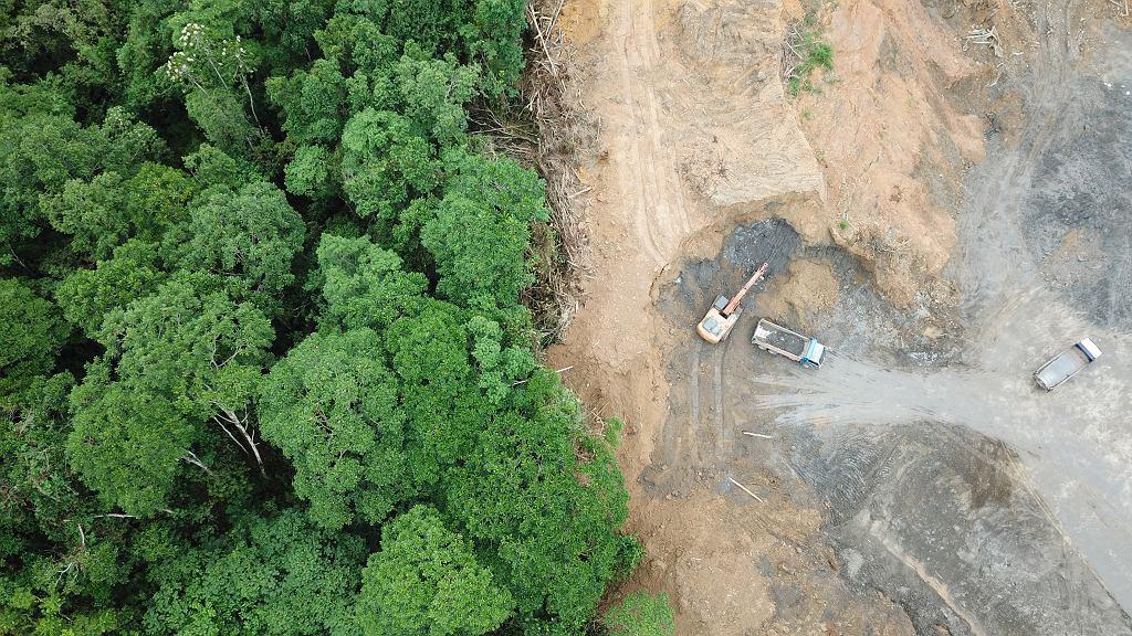 Wylesianie. Dżungla lasu deszczowego na Borneo, zniszczona, aby zrobić miejsce dla plantacji palmy olejowej.