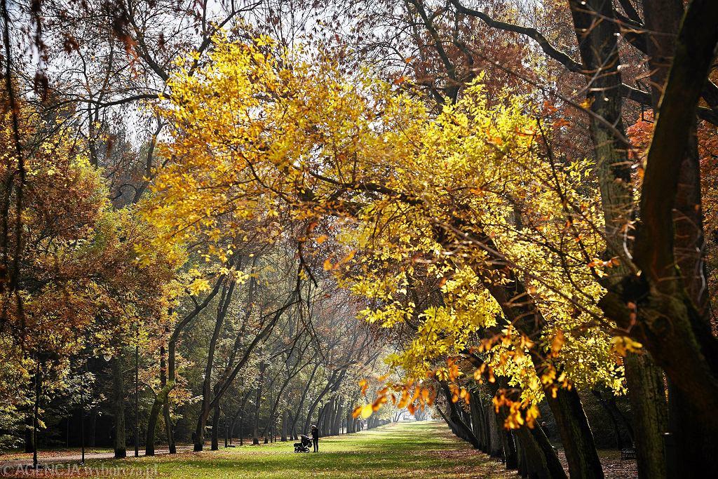 Pogoda. Kiedy przestanie padać, a do Polski zawita złota polska jesień? (zdjęcie ilustracyjne)