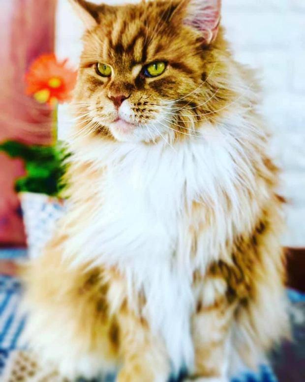 Zdjęcie numer 59 w galerii - Karmel, Daktyl, Kapitan Benny, Ptyś, Wiesław... Kochane i piękne - oto Wasze koty [GALERIA NA DZIEŃ KOTA]