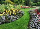 Co posadzić w zacienionym ogrodzie? Te rośliny uwielbiają cień