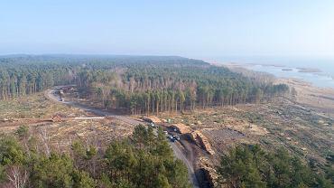 Wycięte drzewa na terenie przyszłego przekopu Mierzei Wiślanej, zdjęcie z 4 marca 2019 r.