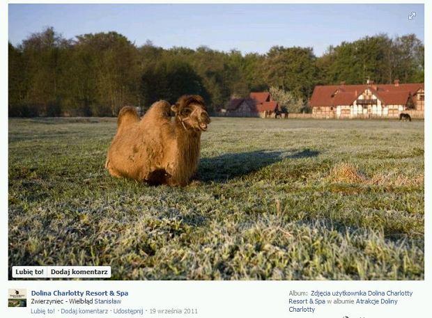 Dolina Charlotty - Zoo, wielbłąd