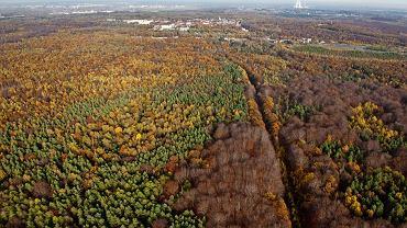 Las Murckowski jest jednym z najpiękniejszych rezerwatów przyrody na terenie GZM