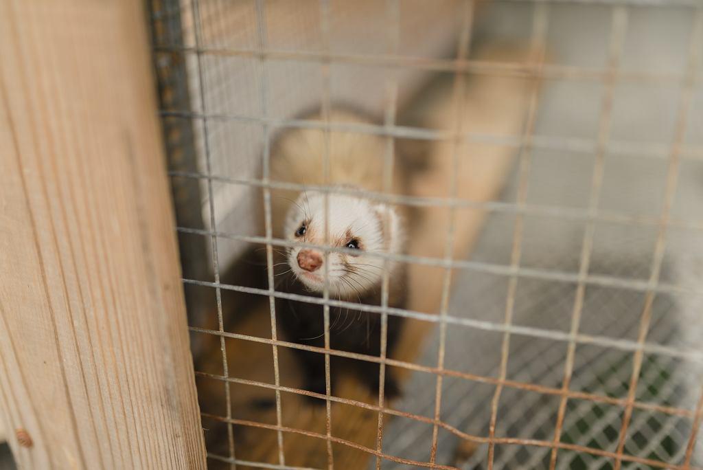 Jakie przepisy znalazły się w 'Piątce dla zwierząt' przegłosowanej przez Sejm? (zdjęcie ilustracyjne)