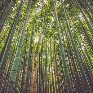 Bambus jest idelany do produkcji ekologicznych szczoteczek do zębów