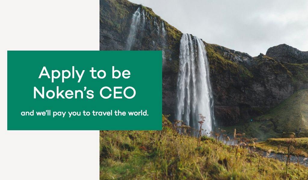 Praca od razu na stanowisku CEO - mają gest!