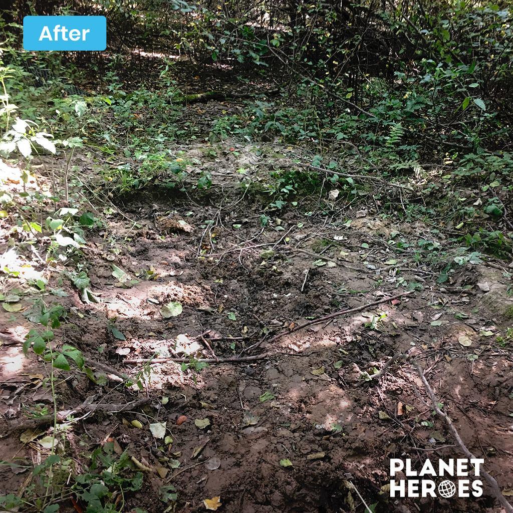 teren naturalny po sprzątaniu