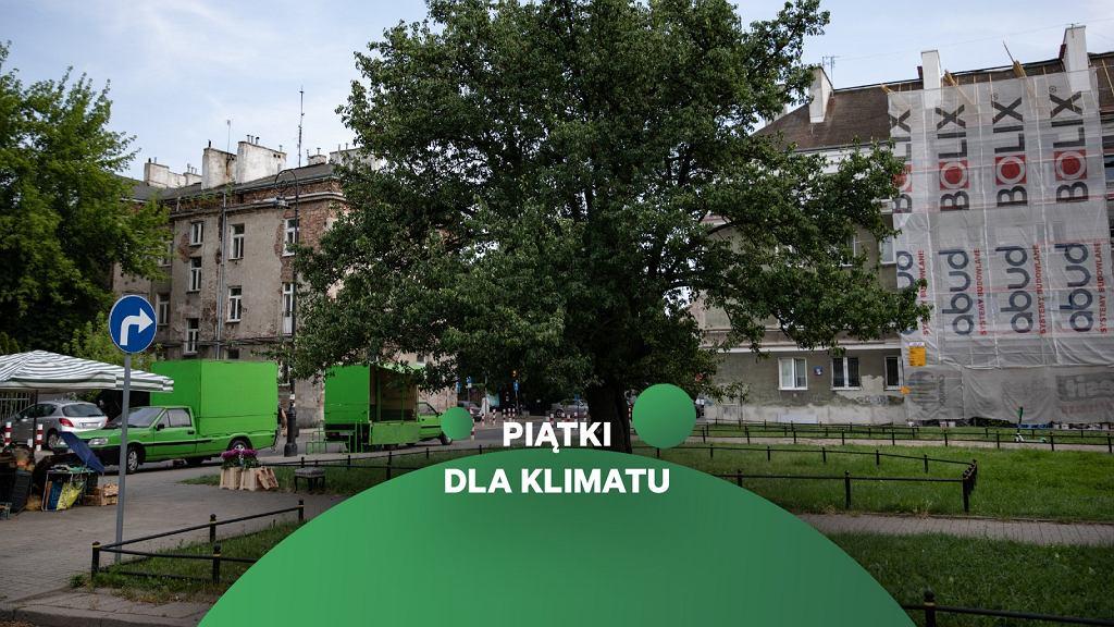 Grusza przy skrzyżowaniu ulic Racławickiej i Bałuckiego