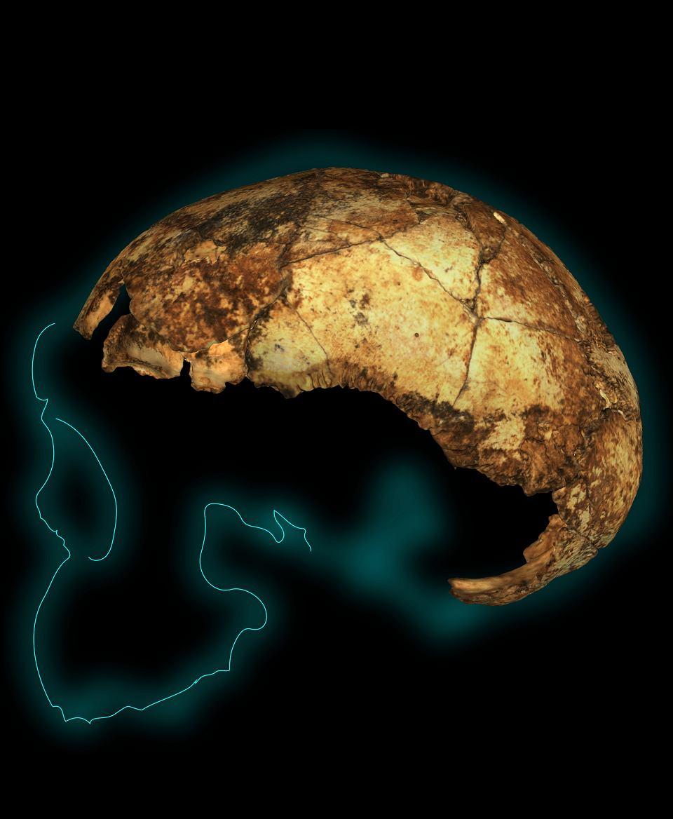 Odkryty w Afryce Południowej fragment czaszki Homo erectusa (opisany jako DNH 134) sprzed blisko dwóch milionów lat