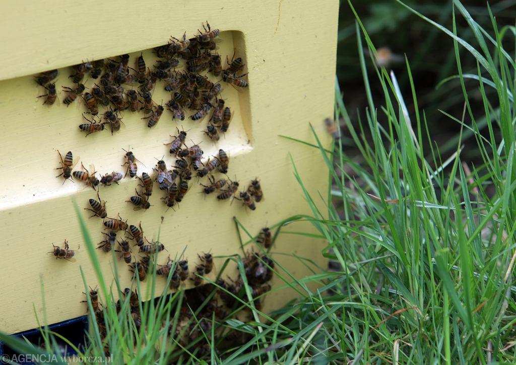 Zdjęcie ilustracyjne / pszczoły