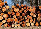 Szafki, okna i drzwi: recykling odpadów drzewnych w Polsce jest ciągle w powijakach