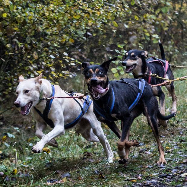 różne psie rasy