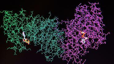 Enzymy to specyficzne białka, które aktywują szereg reakcji biochemicznych zachodzących w ludzkim ciele