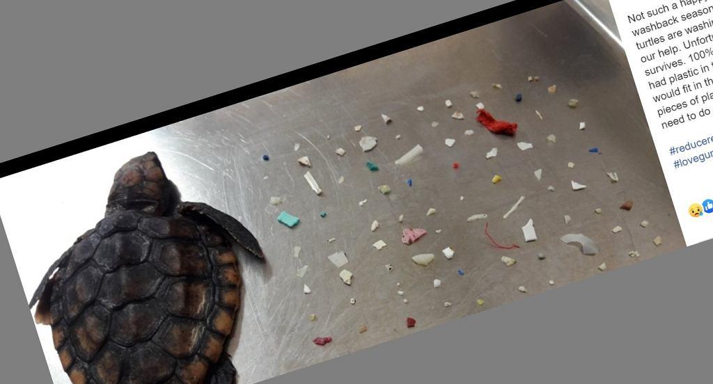 Na plaży znaleziono martwego żółwia. W jego wnętrzu znajdowało się ponad 100 kawałków plastiku