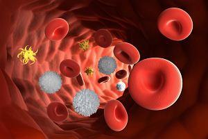 Układ krwiotwórczy. Gdzie, jak i kiedy powstaje krew?