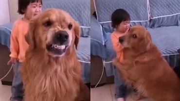 Pies stanął w obronie dziecka