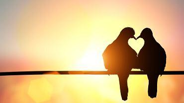 Cytaty o miłości - wybierz ten najlepszy. Zdjęcie ilustracyjne