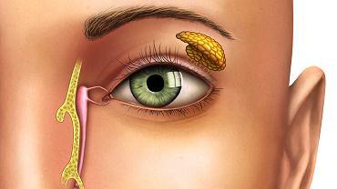 Kanaliki łzowe wchodzą w skład dróg łzowych