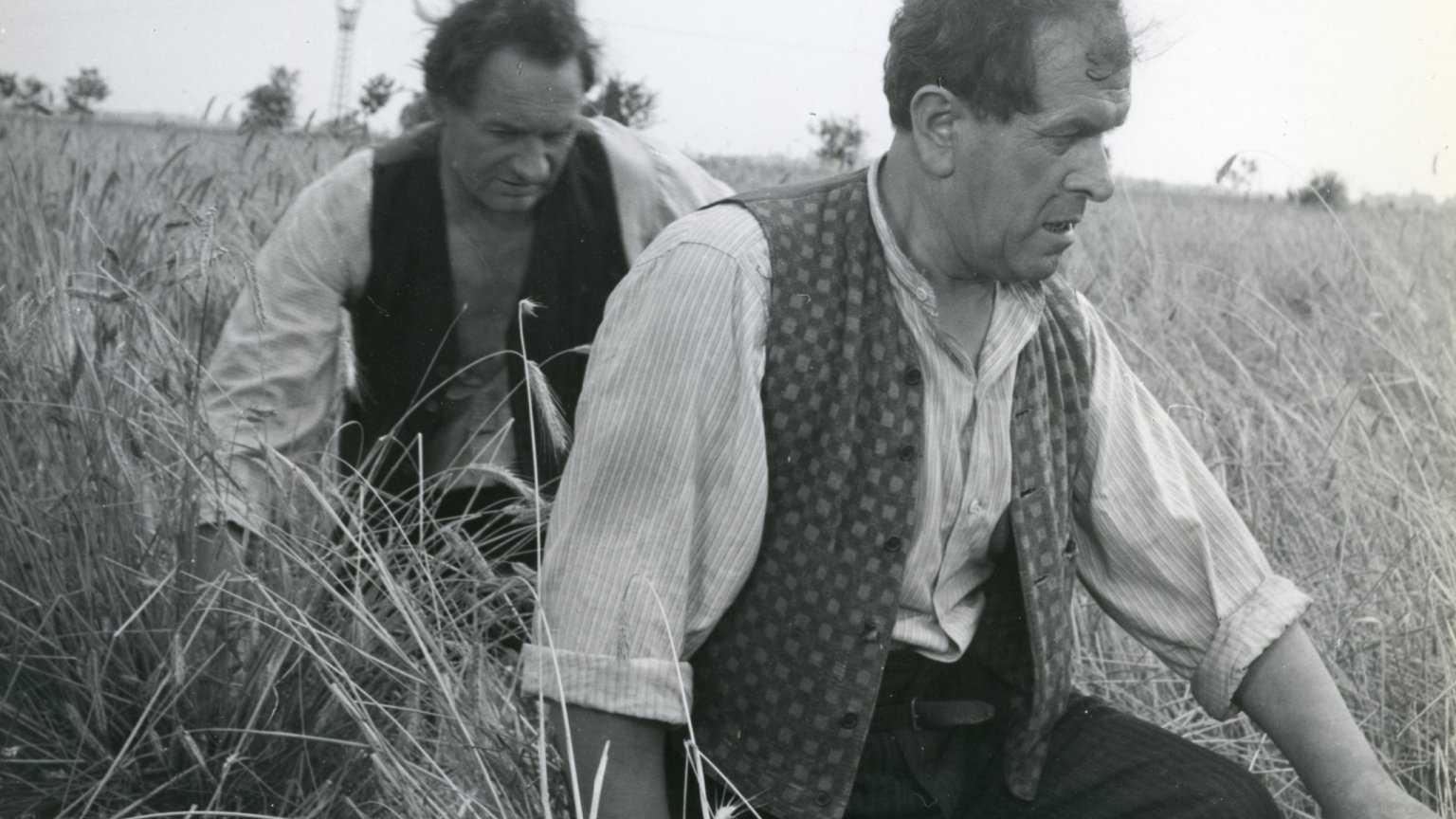 Pawlak i Kargul kroczą po zaminowanym polu
