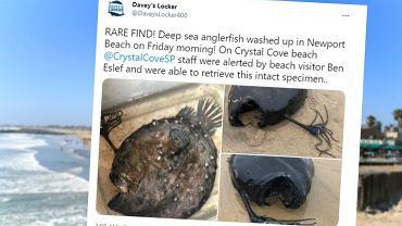 Rzadkie znalezisko na plaży w Kalifornii. Ryba jak z horroru