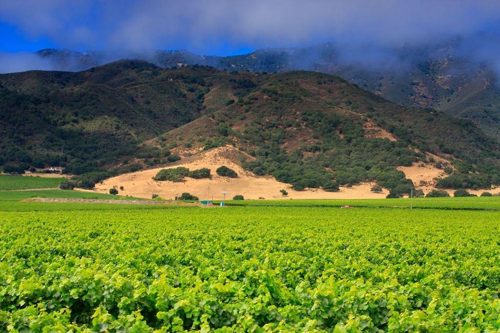 Winnica w Monterey
