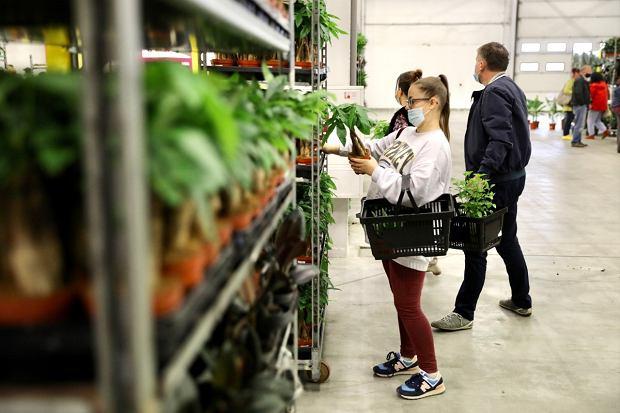 Zdjęcie numer 4 w galerii - Zazieleniły się targi w ten weekend. Trwa Festiwal Roślin i ich wyprzedaż. Zobacz, co można tam kupić  [ZDJĘCIA]