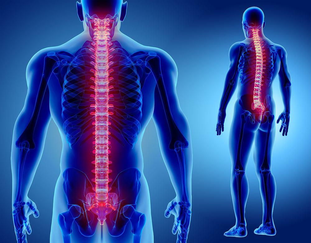Rdzeń kręgowy biegnie przez cały kanał kręgowy, czyli praktycznie przez cały kręgosłup