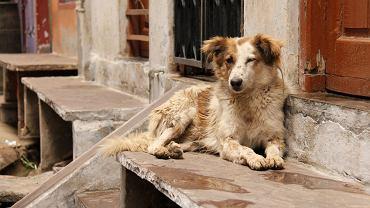 Kampania ma propagować adopcję bezdomnych zwierząt w Indiach, ale nie tylko
