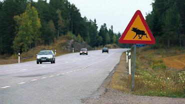 Znak drogowy uwaga na łosie (zdjęcie ilustracyjne)