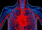 Aorta - budowa, funkcje. Choroby aorty