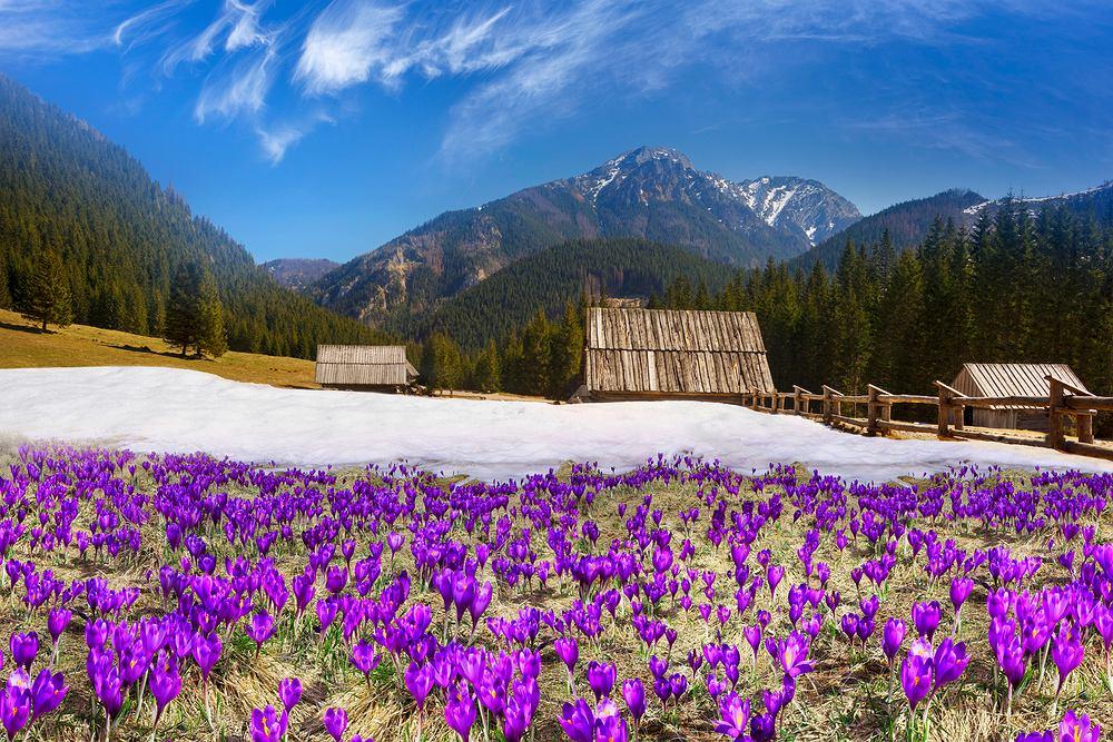 Dolina Chochołowska. Zdjęcie ilustracyjne
