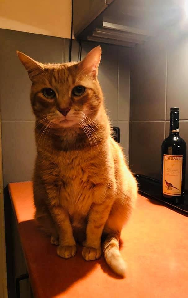Zdjęcie numer 64 w galerii - Karmel, Daktyl, Kapitan Benny, Ptyś, Wiesław... Kochane i piękne - oto Wasze koty [GALERIA NA DZIEŃ KOTA]