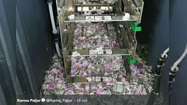 Szczury zniszczyły zawartość bankomatu