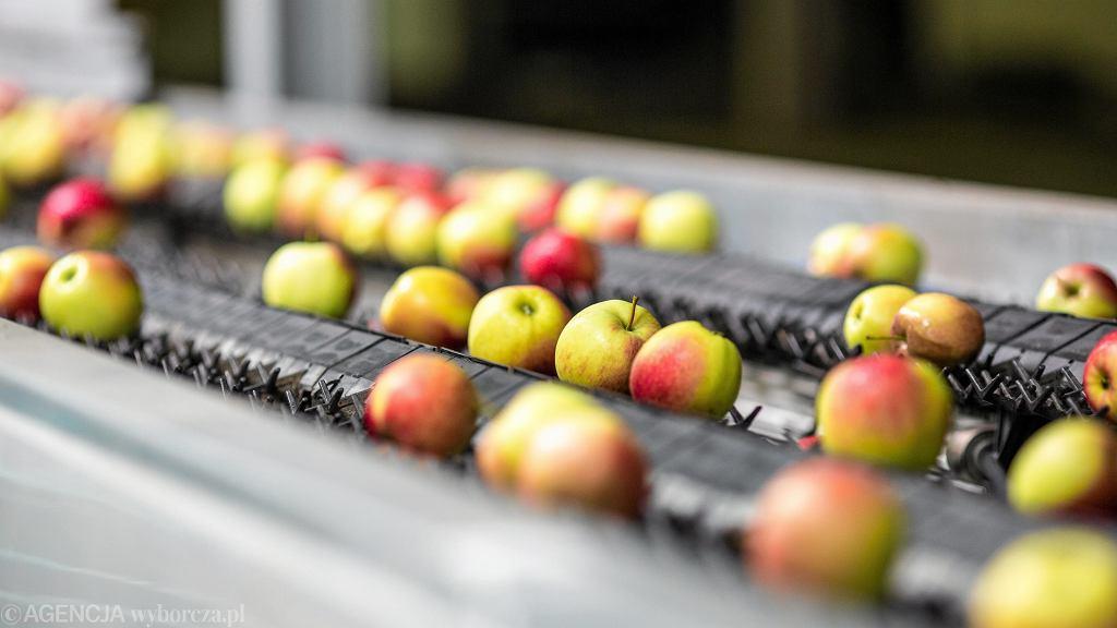 Sortownia jabłek od polskich sadowników - zdjęcie poglądowe