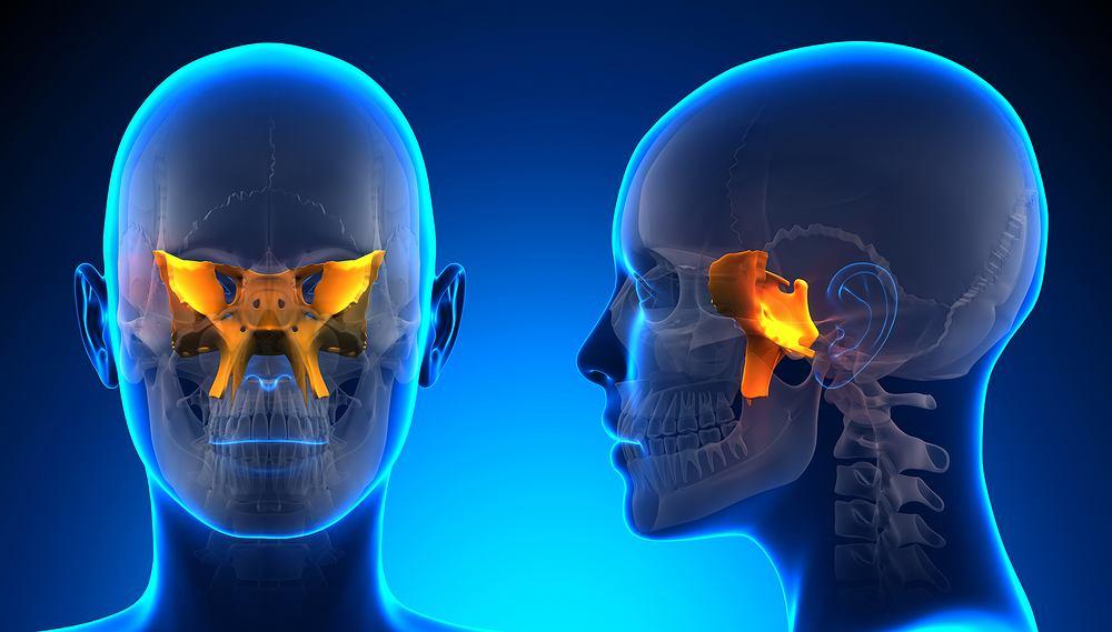 Kość klinowa wraz z kością potyliczną tworzy podstawę czaszki