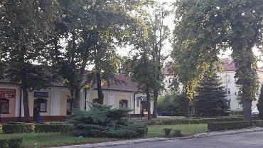 Drzewa mają zniknąć z centrum Włodawy