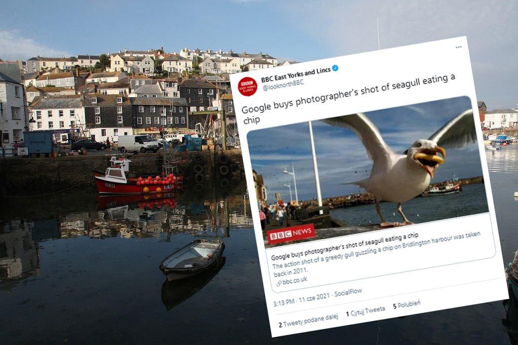 Google zapłaciło amatorce za zdjęcie mewy z frytką w dziobie. Cena pozostaje tajemnicą