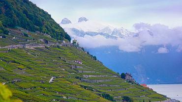 Winnice w Lavaux/ CC BY 2.0/ Kosala Bandera/ Flickr. com