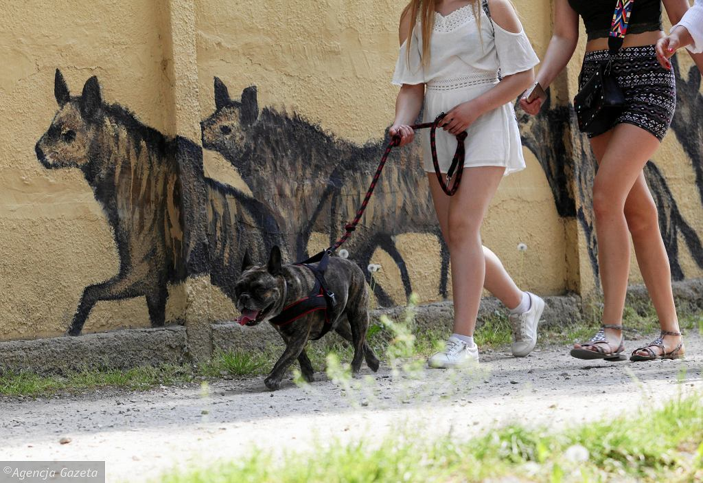 03.05.2018, Spacer z psami w pobliżu zoo