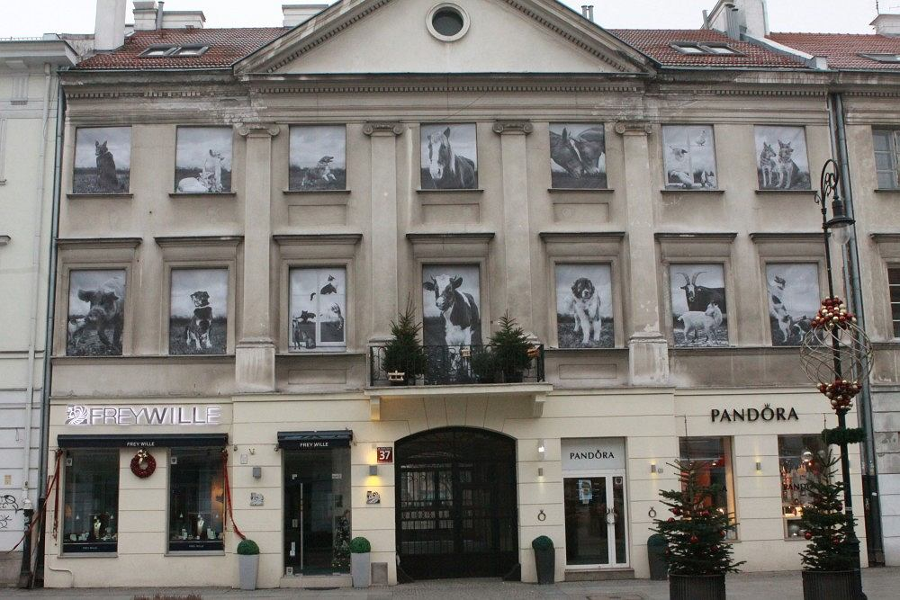 Okna kamienicy położonej przy Nowym Świecie 37 stały się najbardziej nietypową galerią sztuki w Warszawie.