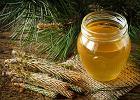 Syrop z sosny: lek na przeziębienie. Jak przygotować syrop z sosny?