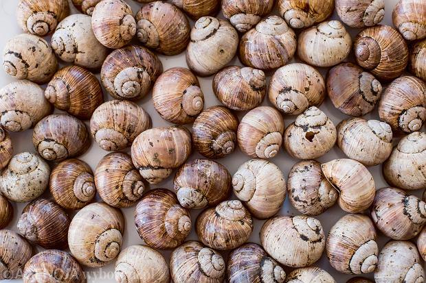 Ekspert: To paradoks, że ślimaków nie jadamy, a Polska od lat jest ich cenionym producentem i dostawcą