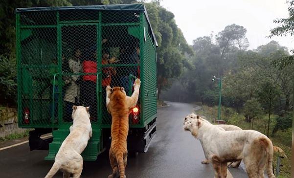 Zoo w Chinach wpadło na nietypowy pomysł. W klatkach zamyka nie zwierzęta, a odwiedzających