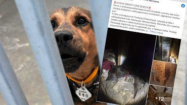 Bestialskie znalezisko w domu seniorki. 'Wyglądało to jak sala tortur dla zwierząt'