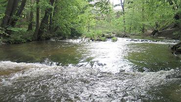 Wakacje 2020. Rzeka Tanew płynąca przez Roztocze, które jeszcze w wielu miejscach jest nieodkryte przez turystów
