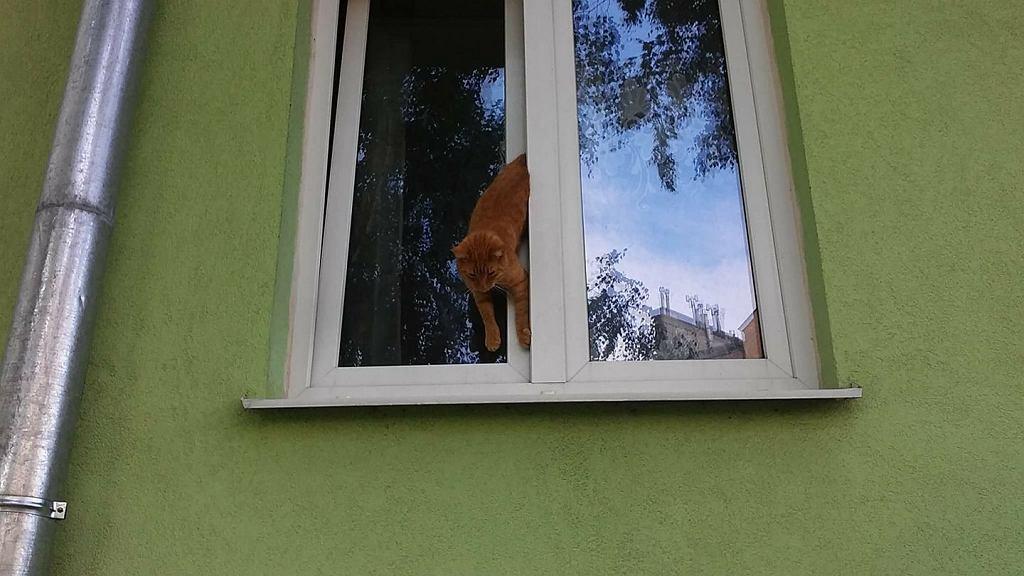 Kot zakleszczył się w uchylonym oknie