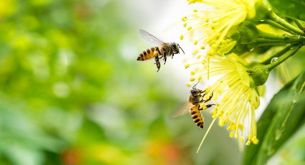 Adoptuj pszczołę, włącz się do akcji