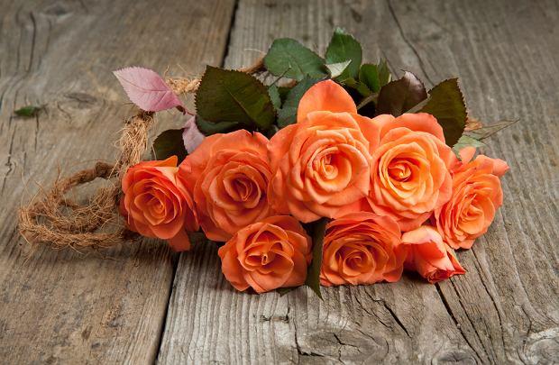 Znaczenie kwiatów - pomarańczowe róże. Zdjęcie ilustracyjne